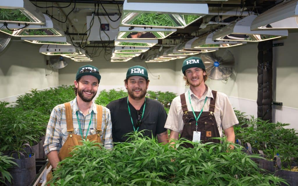 Honest Marijuana Grow Team
