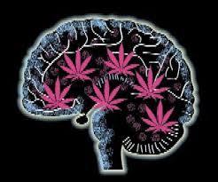 marijuana memory