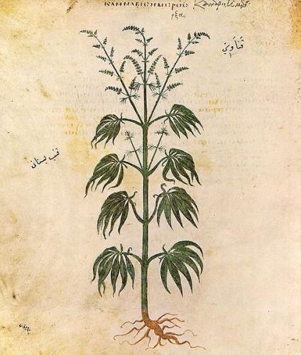ancient marijuana leaf