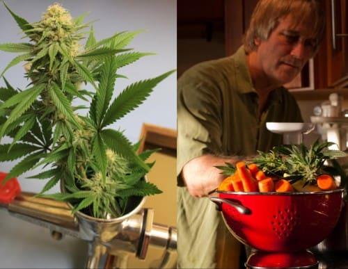 dr courtneys raw cannabis juice