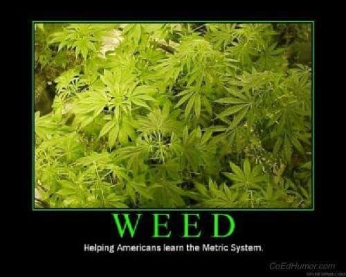 weed metric system
