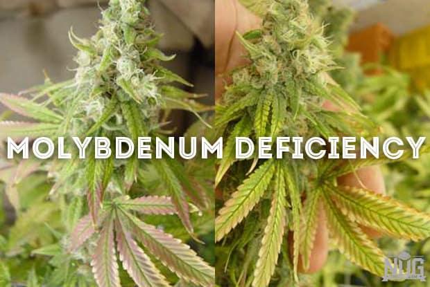 How to grow marijuana the ultimate organic guide mightylinksfo