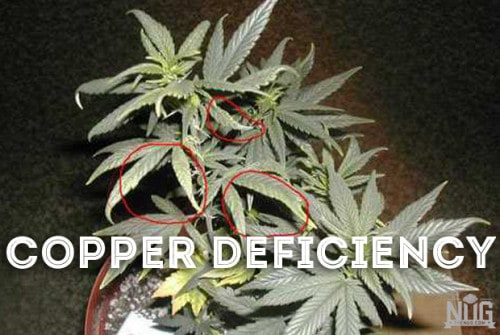 how to grow marijuana picture guide