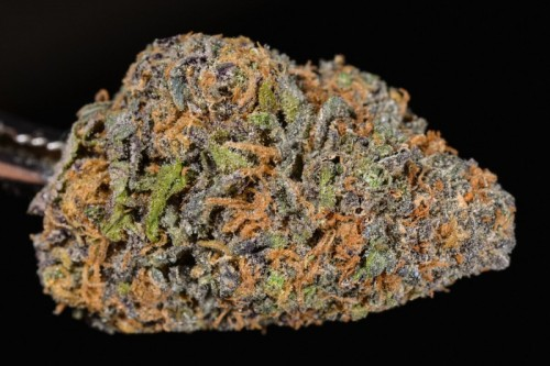 Grandaddy Purple strain