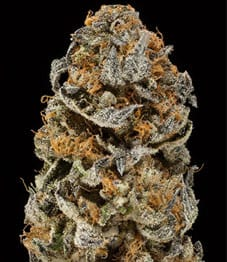 Thin Mint Girl Scout Cookies_Strains_1