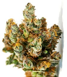 Thin Mint Girl Scout Cookies_Strains_2