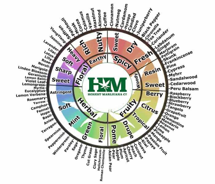 Terpenes Flavor Wheel
