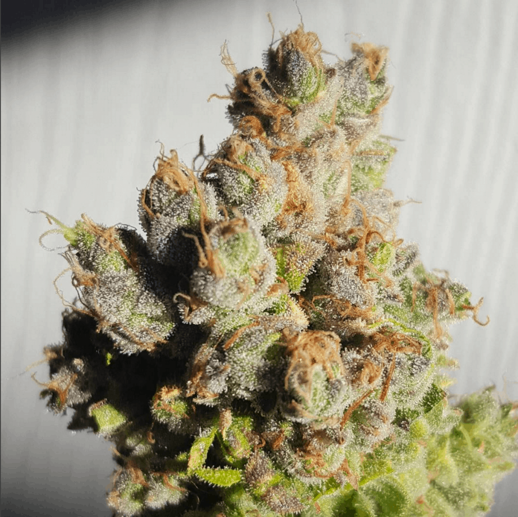 Strongest Weed Strains  Top 10